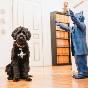 Hansi Bürohund
